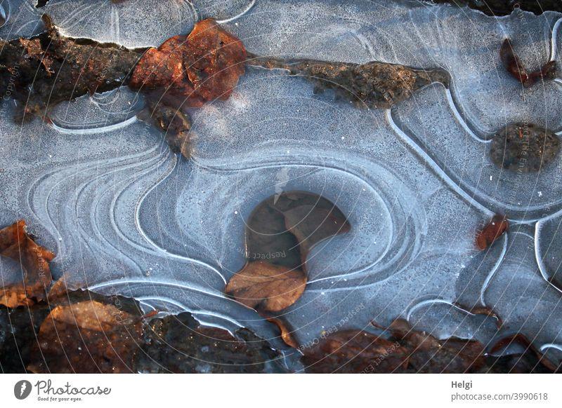Eisstrukturen mit verwelkten Blättern auf einer Pfütze Frost Kälte Winter Blatt vertrocknet Muster Struktur Eisschicht kalt gefroren Natur Menschenleer