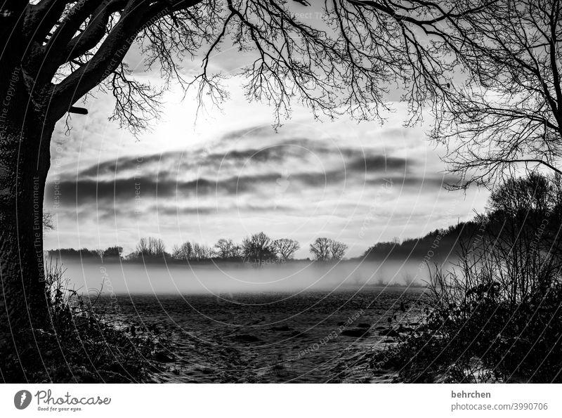 geheimnisvoll mystisch Klima traumhaft träumen Schwarzweißfoto Nebel Märchenwald schön verträumt idyllisch Schneedecke Schneelandschaft Heimat Winterstimmung