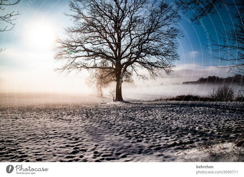 magisch Baumstamm Äste und Zweige mystisch Klima traumhaft träumen schön Märchenwald geheimnisvoll Nebel verträumt idyllisch Schneedecke Schneelandschaft Heimat