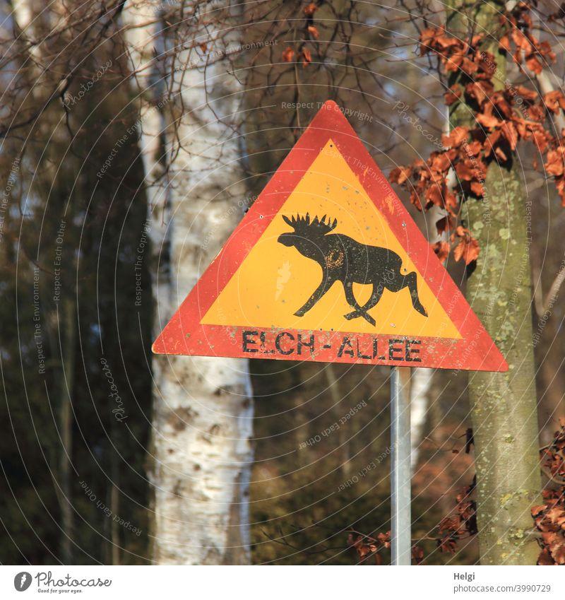 Elch-Allee - gelb-rotes Schild mit einer schwarzen Elch-Silhouette und der Aufschrift Elch-Allee vor Bäumen Elchallee Hinweisschild Baumstamm Licht Schatten