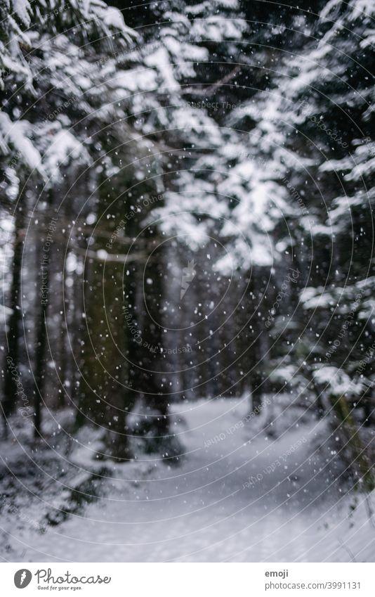 Schneeflocken im Wald im Winter winter schnee grau trist weiss kalt kühl düster Baum Bokeh Schneefall unscharf Unschärfe fokus