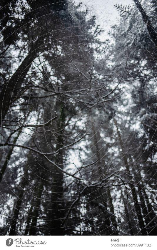 Schneeflocken im Wald im Winter winter schnee grau trist weiss kalt kühl düster Baum Bokeh Schneefall Regen