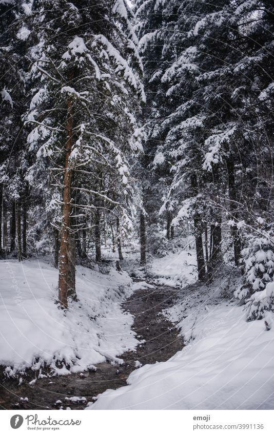 Bach im Wald im Winter mit Schnee winter schnee grau trist weiss kalt kühl düster Baum