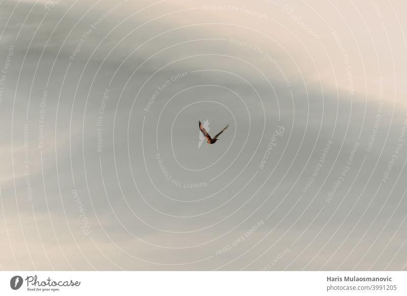 Vogel fliegt am Himmel, Freiheit Tier Hintergrund schön Vogelflug blau Cloud Wolken Flug Fliege frei Möwe Stimmung natürlich Natur im Freien MEER Silhouette