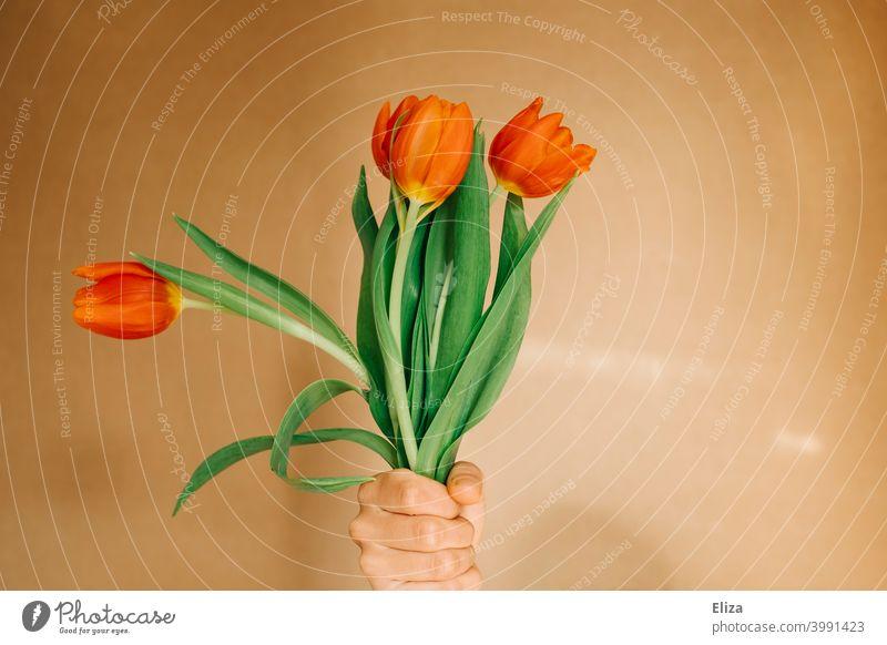 Eine Hand hält einen Strauß Tulpen Blumenstrauß orange rot Frühling Blüte geben Muttertag Valentinstag schenken Geburtstag Blühend