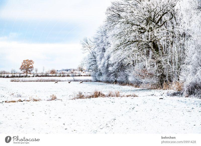 bambis winterwonderland Schneefall weiß ruhig Himmel Winter Wald Feld Wiese Umwelt Natur Landschaft Frost Bäume Winterlandschaft kalt Kälte frieren gefroren