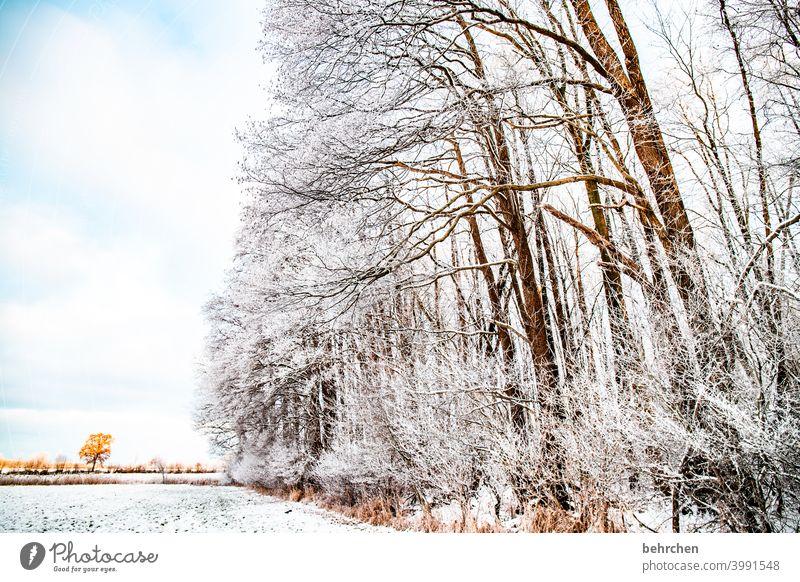 bestäubt Winterwald Sonnenlicht Schneefall weiß ruhig Umwelt Natur Wiese Feld Wald Himmel Landschaft Frost Bäume Winterlandschaft kalt Kälte frieren