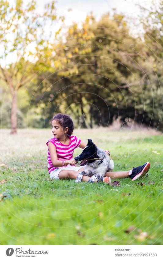 Junges Mädchen mit einem Border Collie auf einem Feld Aktivität Tier Hintergrund schön blond Borte Kaukasier kaukasisches Mädchen Kind Kindheit Kinder niedlich