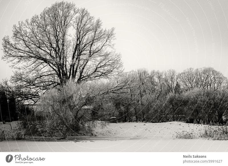 große Eiche am Flussufer im tiefen Winter Dezember Schönheit Weihnachten niemand Landschaft Umwelt frostig Schneefall Bäume Wetter gefroren verschneite Röhricht
