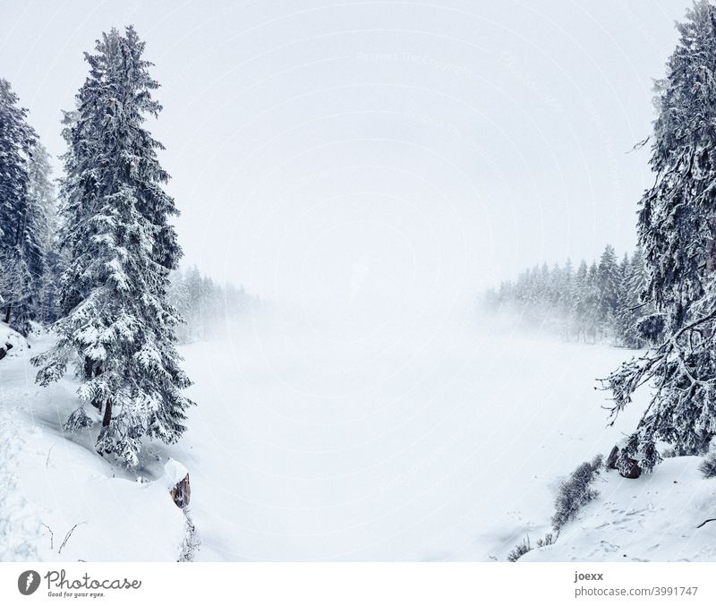 Tannen in Winterlandschaft mit eindringendem Nebel Landschaft Schnee Kälte Tannenwald See zugefrorern Schnedecke Außenaufnahme Baum Natur Wald Umwelt