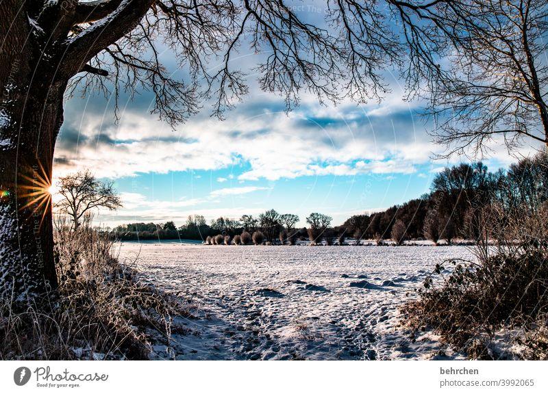 SONN(enwinter)TAG Sonnenstrahlen Sonnenlicht Schneefall weiß ruhig Umwelt Wiese Feld Wald Winter Himmel Natur frieren Jahreszeiten Märchenhaft Schneelandschaft