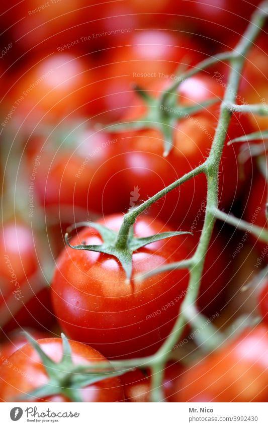 Tomaten Gemüse Lebensmittel frisch rot Gesundheit Ernährung Vegetarische Ernährung Bioprodukte lecker Gesunde Ernährung natürlich Appetit & Hunger Pflanze