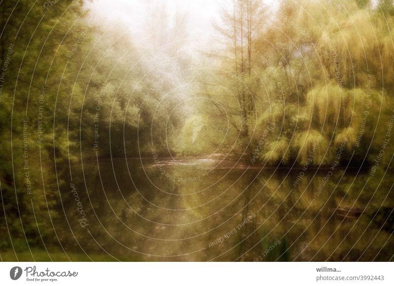 Wellingholzhausener Fotopoesie Romantik Bäume See Teich Wald grün verklärt verschwommen Traumbild Fotogemälde romantisch Park Waldsee Trauerweide