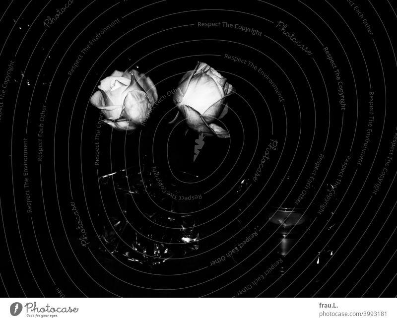 Zwei Rosen im Dunklen Blüte Tisch Vase Dekoration & Verzierung Blühend Blumenstrauß Teelicht