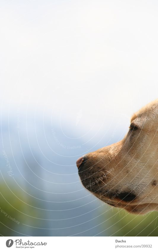 hmm Frühling Hund Erholung Sonnenbad Labrador