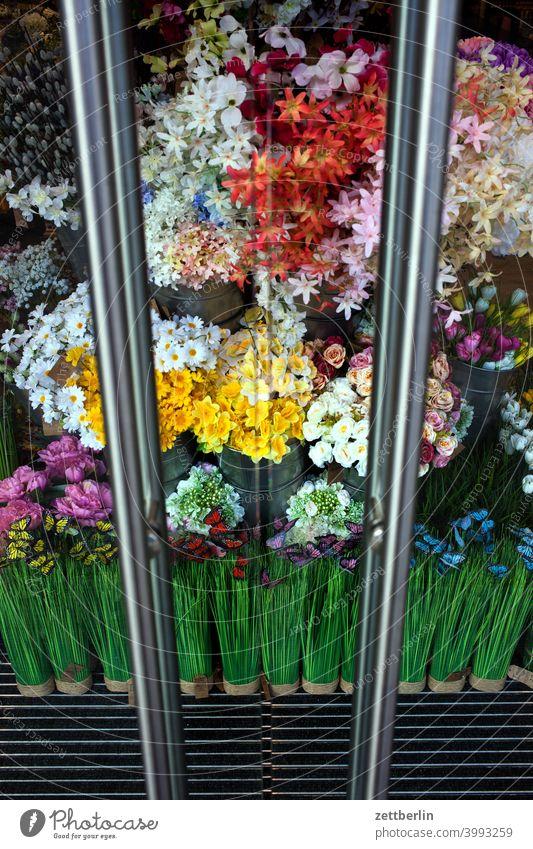 Blumen im Schaufenster blume blüte blühen blumenstrauß bunt farbe farbig blumenladen blumengeschäft sortiment auswahl schaufenster tür glastür scheibe