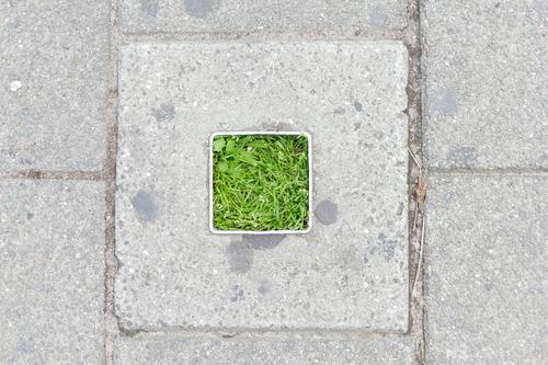 Konkrete quadratische Vegetation grün urban Pflanze Sommer im Freien sich[Akk] entspannen ruhen Großstadt Gras Rasen Frühling Hintergrund Umwelt Saison