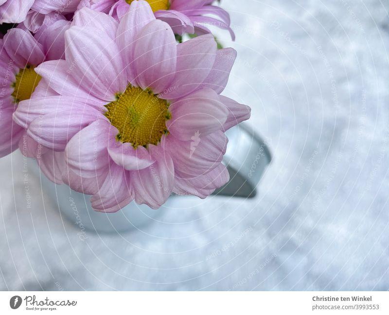 Draufsicht auf rosa Blüten in einer silbrigen Metallkanne, die auf marmoriertem hellem Untergrund steht. Der Untergrund sieht aus wie Schnee... Chrysanthemen