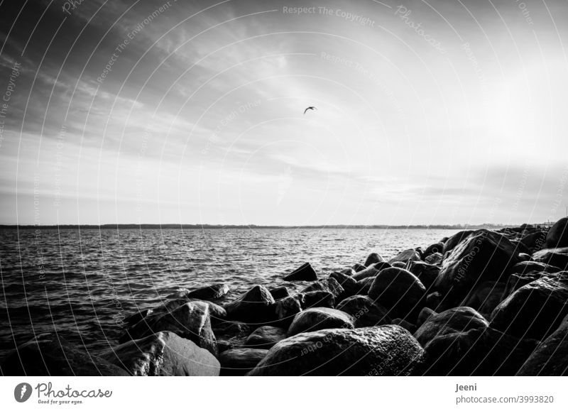 Küstenschutz aus Felsen an der Ostsee Küstenlinie küstenschutz ostseeküste Ostseestrand Strand Wasser Meer Küstenstreifen Sturm Sturmschaden Schutz Überflutung