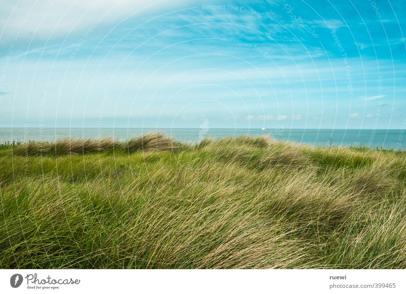 Dünengras Himmel Natur Ferien & Urlaub & Reisen blau Wasser Sommer Pflanze Sonne Meer Landschaft Wolken Strand Ferne Umwelt Wärme Frühling