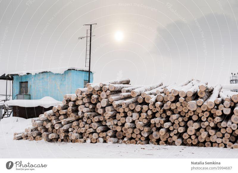 Bunch von gesägten Birkenstämmen und blauen Wache Stand im Winter bewölkten Tag. Nutzholz Holz Lagerhalle Schnee hölzern Totholz Speicher Hartholz Säge