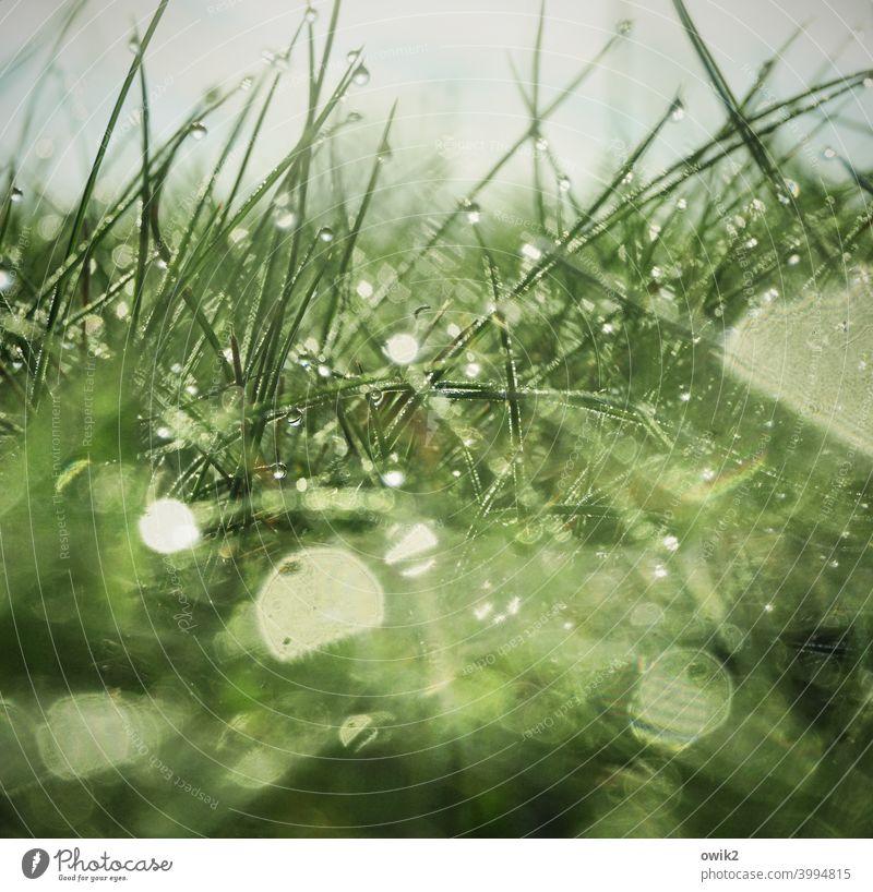 Nasser Teppich Wiese Nahaufnahme flirren Morgenlicht frisch schemenhaft Detail Farbfoto Regen Pflanze Gegenlicht Detailaufnahme Wasser Halm Menschenleer klein