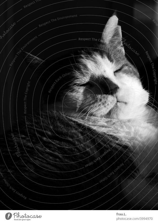 Ein bisschen dösen Haustiere getigert Fell Tierporträt Katze