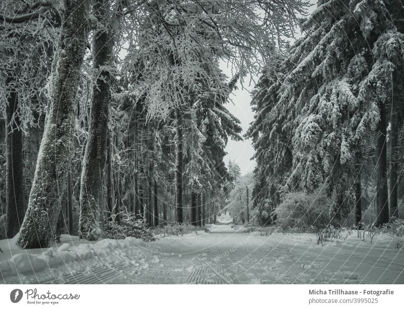 Winterlandschaft im Thüringer Wald Thüringen Winterwald Rennsteig Schneekopf Bäume verschneit Frost kalt Weg Loipe Skifahren Langlauf Urlaub Touristen Tourismus