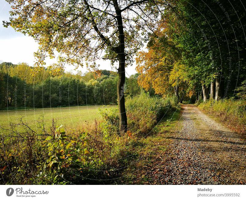 Feldweg entlang einer Waldlichtung mit grünen Wiesen im Herbst in Oerlinghausen bei Bielefeld im Teutoburger Wald in Ostwestfalen-Lippe Waldweg herbst