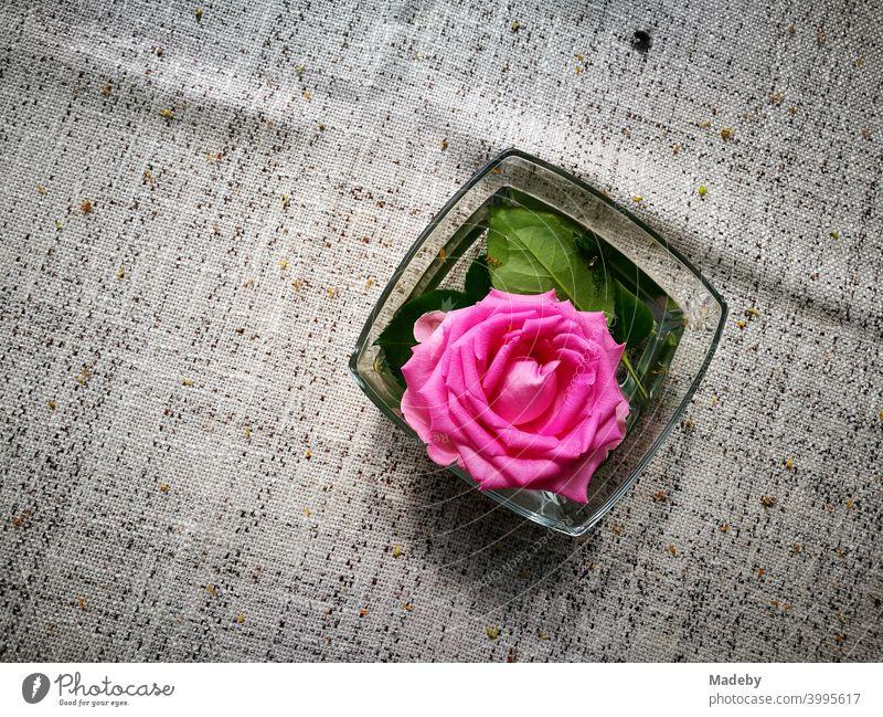 Dekorative lila Rosenblüte in einer Glasschale aus Tischdekoration auf naturfarbenem Tischtuch im Biergarten am Bartholdskrug in Oerlinghausen bei Bielefeld im Teutoburger Wald in Ostwestfalen-Lippe