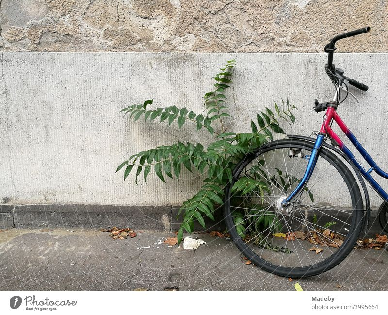 Altes buntes Fahrrad mit wild wachsender Grünpflanze auf grauem Asphalt vor alter Fassade in Naturfarben in Köln am Rhein in Nordrhein-Westfalen Rad Bunt Farbe