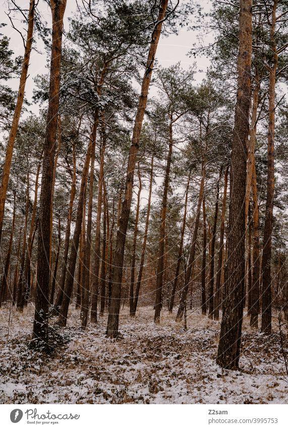 Winterlandschaft winterspaziergang winterlandschaft natur bäume kälte frost einsam ruhe entspannung stimmung Winterstimmung Wintertag wald Winterwald