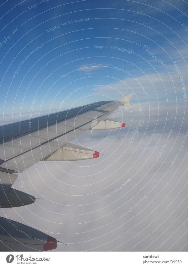 Freiheit Flugzeug Tragfläche Wolken Luft frisch Luftverkehr Himmel