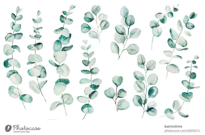 Aquarell Eucaliptus Blätter Set Illustration Wasserfarbe Eukaliptus Ast Zeichnung grün tropisch Grafik u. Illustration Dschungel Papier botanisch Blatt exotisch