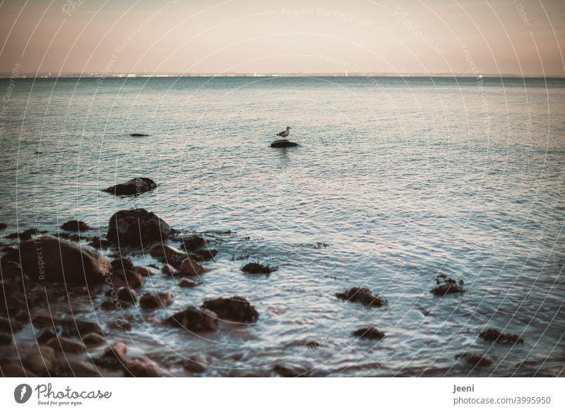 Wie soll ich hier bloß wieder wegkommen? | Möwe sitzt auf einem Felsbrocken im Meer Möwenvögel Vogel Tier Außenaufnahme Farbfoto fliegen Flügel Tag Menschenleer