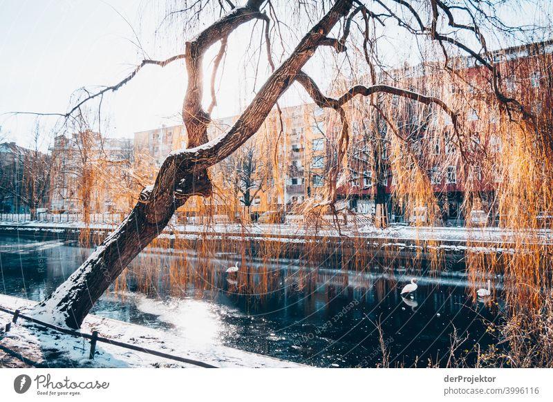 Landwehrkanal im Winter in Kreuzberg Mauer Wand trendy Licht Tag Textfreiraum Mitte Außenaufnahme Experiment Textfreiraum oben Berlin Farbfoto Himmel (Jenseits)