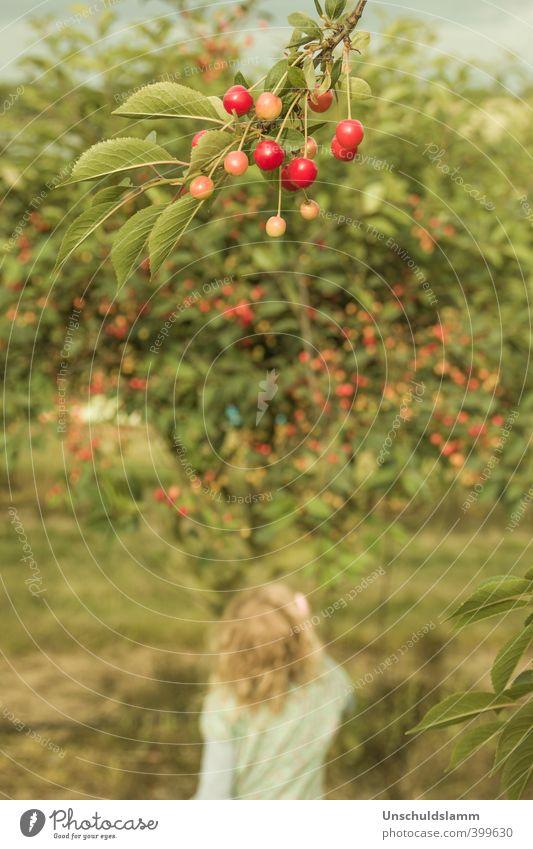 Cherrytree Lebensmittel Frucht Ernährung Picknick Bioprodukte Lifestyle Sommer Garten Kind Mädchen Kindheit 1 Mensch 3-8 Jahre Umwelt Natur Baum Nutzpflanze