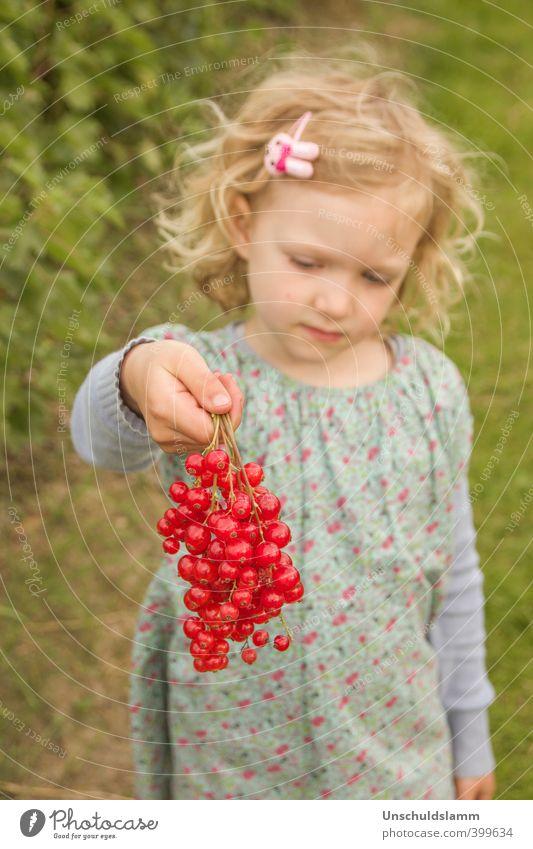 frisch gepflückt Mensch Kind Natur Pflanze Farbe Sommer rot Mädchen Leben natürlich Gesundheit Glück Garten Lifestyle Frucht Häusliches Leben