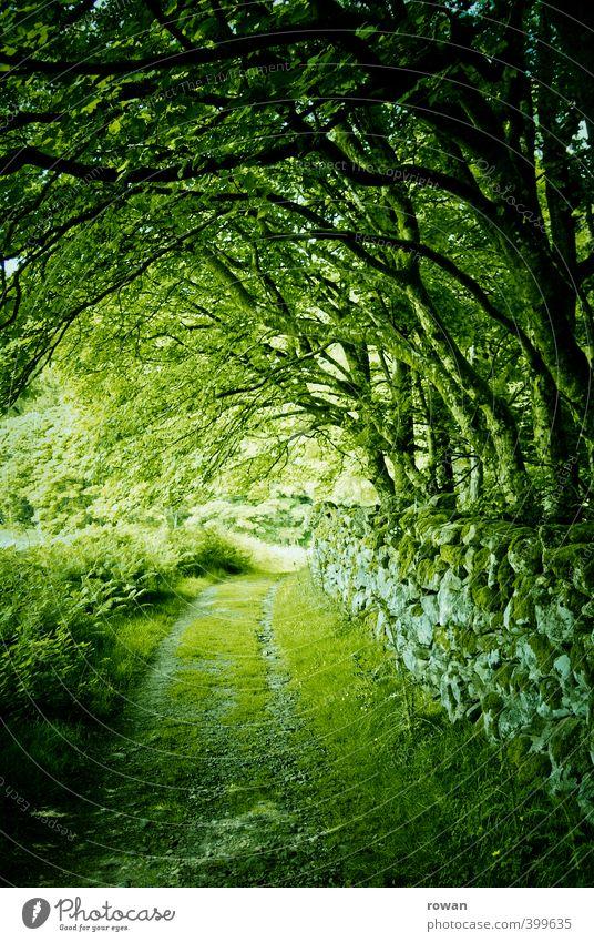 grün Umwelt Natur Landschaft Baum Gras Moos Garten Park Wald gruselig Mauer Mauerreste Steinmauer Republik Irland Tunnel mystisch Blatt Blätterdach Romantik