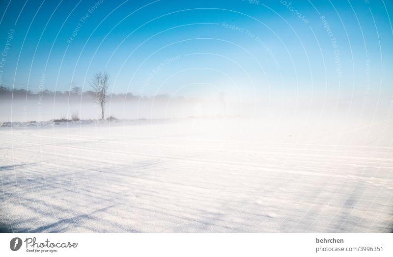 aufgeblasen | schneesturm Klima traumhaft schön idyllisch Schneedecke Schneelandschaft Heimat Acker Märchenhaft Winterspaziergang Winterstimmung Wintertag