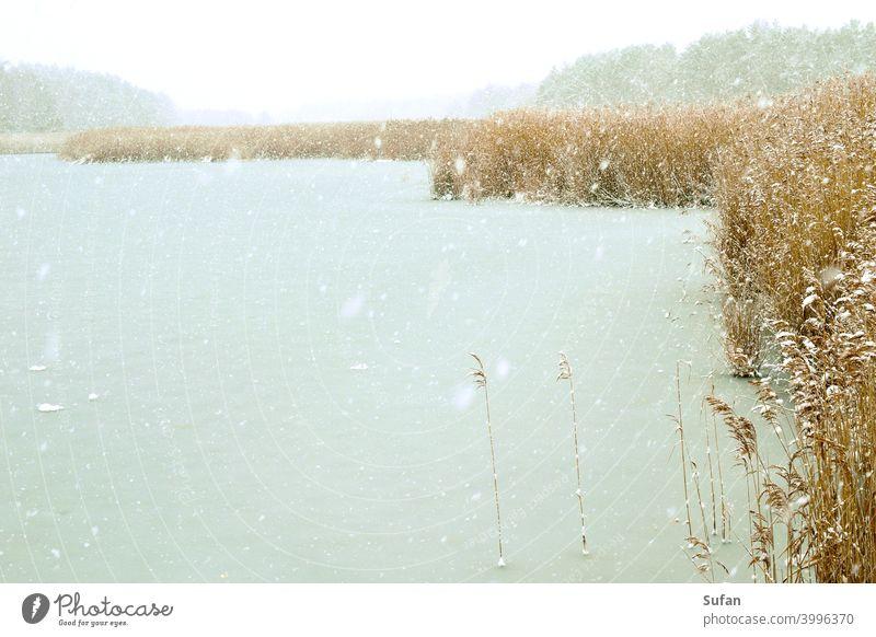 Schneegestöber am See Schneeflocken Seeufer Eis Schilf Winterstimmung kalt Wind Frost frostig weiß grau braun schneetreiben Einsamkeit Luft eisige Luft Natur