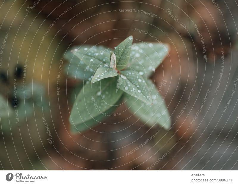Zartes Pflänzchen in Nahaufnahme mit viel Bokeh soft focus soft filtered sanft sanfter fokus unschärfe Blume Pflanze zart Pflanzenteile pflanzenspitze Blatt