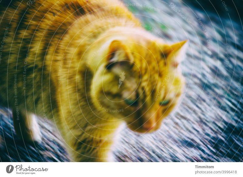 Jetzt aber schnell | Klappe, ich mach ja schon! Katze Bewegungsunschärfe Wege & Pfade Fell Augen Dynamik Tier Farbfoto Menschenleer