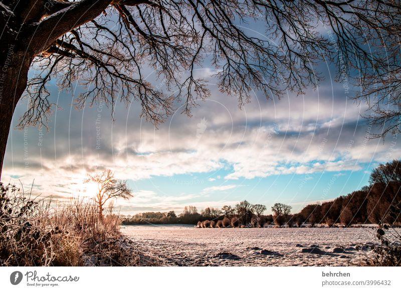 sonne gibts auch im winter! Sonnenstrahlen Sonnenlicht Schneefall weiß ruhig Umwelt Wiese Feld Wald Frost Landschaft Winter Himmel Natur frieren Jahreszeiten