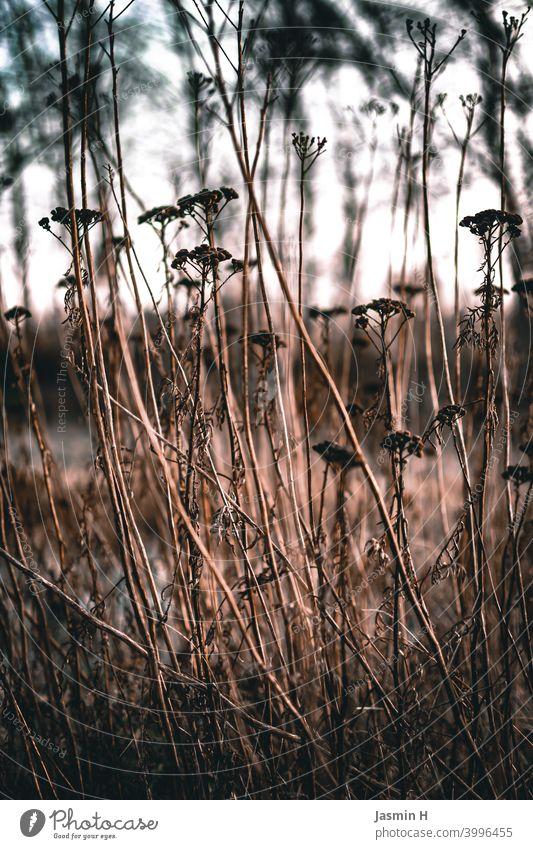 Verwelktes am Feldrand Natur Außenaufnahme Umwelt Pflanze Farbfoto Menschenleer natürlich verwelkt Vergänglichkeit draußen