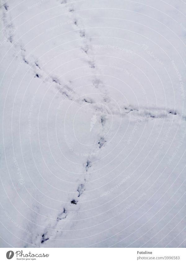 Spuren im Schnee IV. Die Entscheidung, welche Richtung es werden soll, fiel wohl nicht leicht. Winter kalt weiß Frost Außenaufnahme Menschenleer Natur Tag