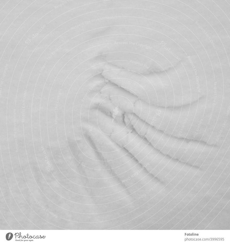 Spuren im Schnee II - Flügelspuren Winter kalt weiß Frost Außenaufnahme Menschenleer Natur Tag Schneespur Fußspur Kontrast Wetter Umwelt Schneedecke Licht