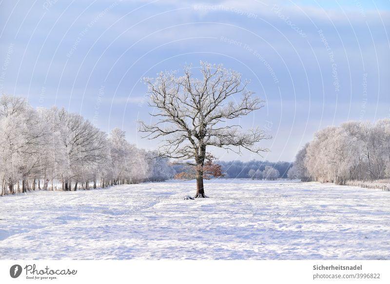 Baum auf Wiese Natur Feld Landschaft Menschenleer Tag Außenaufnahme Schönes Wetter Winter weiß Schnee schneebedeckt Schneelandschaft Winterstimmung Weide kalt