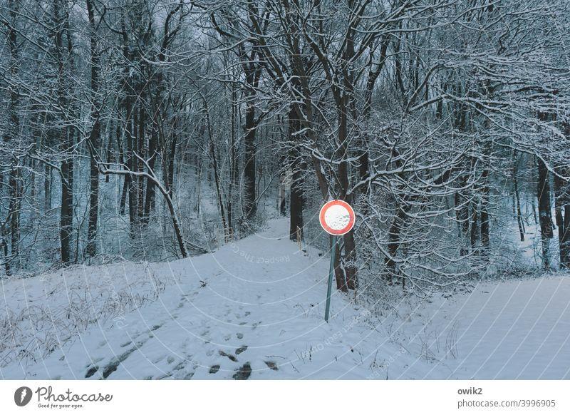 Farbtupfer Schild Wald Baumstamm Vorsicht Achtung Zweige Äste aufpassen Natur Umwelt Landschaft Menschenleer gefährlich Unfallgefahr Winter kalt vorsichtshalber