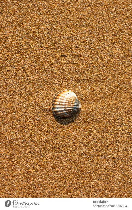 Muschel am Strand schäumen Streusel lsund MEER Meeresufer Seeküste Panzer winken nass Kulissen Hintergrund gebadet wogen zweischalig Granulat Streusand